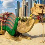 Dubaj TOP10 Pustynia